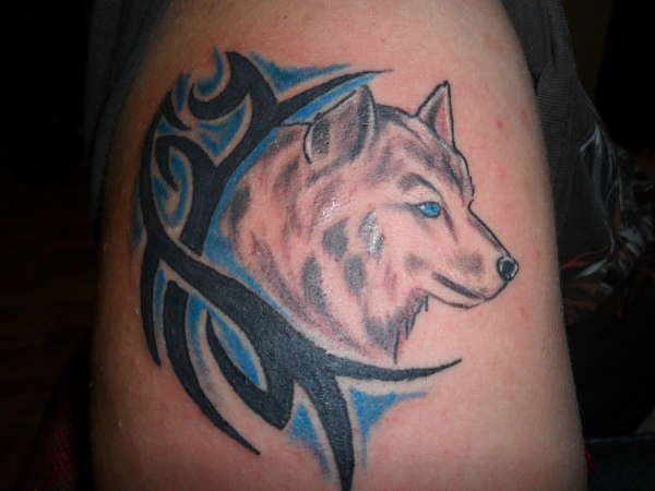 Wolf With Tribal tattoo