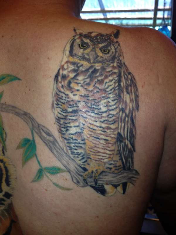 My Owl tattoo