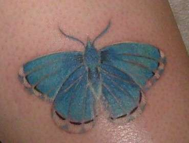 A new butterfly tattoo