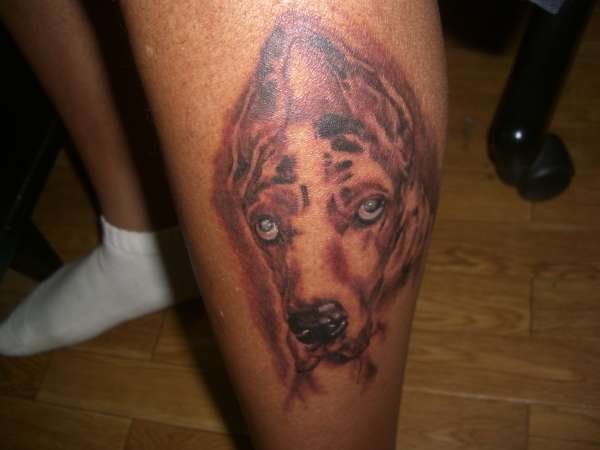 My late 200 Lb Great Dane Bandit (RIP) tattoo