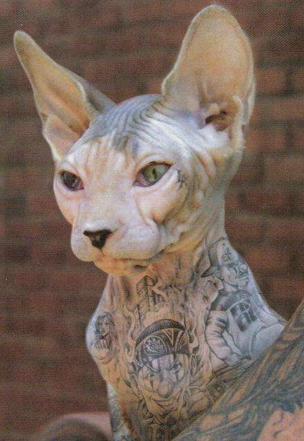 Inked Pussy ( cat that is ) tattoo