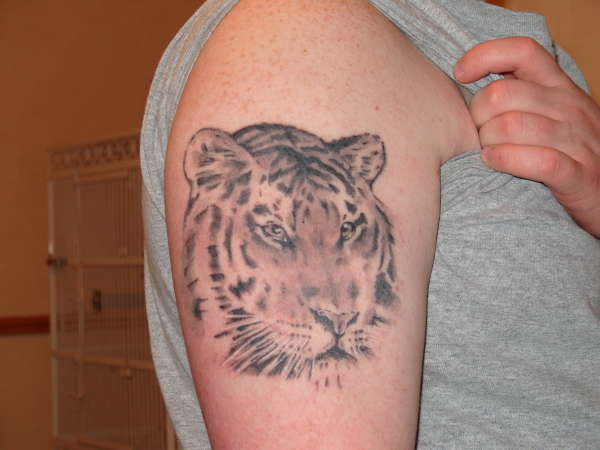 tiger head tattoo
