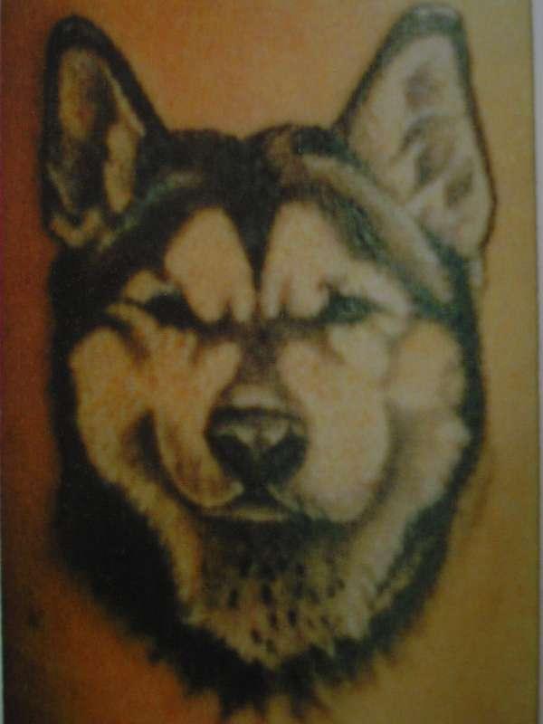 Husky tattoo