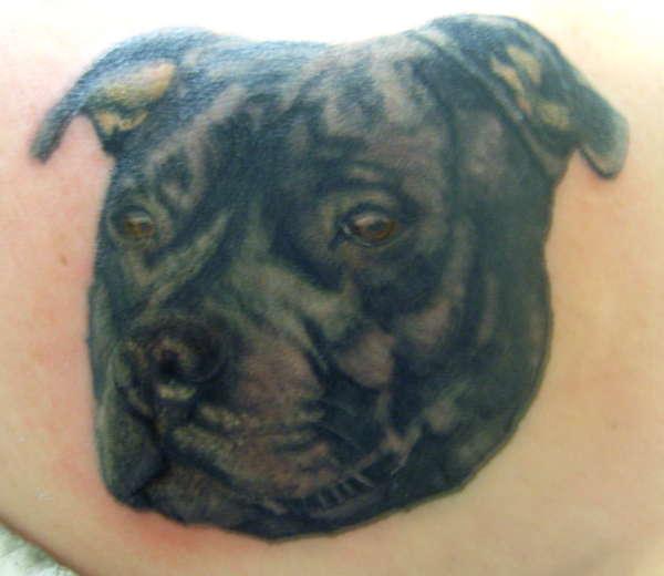 Staffordshire Bull Terrier Portrait tattoo