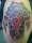 Piper tattoo