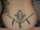 crookshanks tattoo