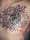 DAVE HORSFALL tattoo