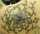 jon hamlett tattoo