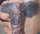 Debutante8 tattoo