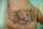 jessica tattoo