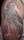 Angua tattoo