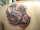 HannahElphaba tattoo
