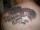 IainMiller tattoo