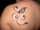 holly tattoo