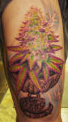cannibus cup with purple kush tattoo