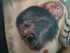 American Werewolf in London tattoo