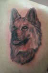 german shep tattoo