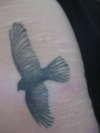 The Hawk tattoo