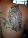 My Owl tattoo