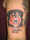 In Memory Of Sheba tattoo