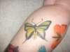 Paradise Birdwing tattoo