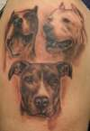 Dave's Pitbulls tattoo